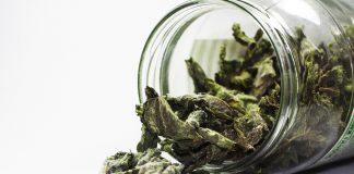 Groene thee verlaagt en versnelt het metabolisme