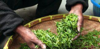 6 redenen waarom groene thee zo gezond voor jou is!